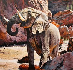 Elefant in Namibien.JPG